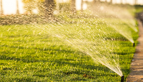 Water and fertilizer integration VS traditional irrigation and fertilization